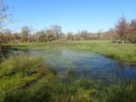 Prairie humide de la RNR La Massonne