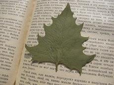 herbarium-1372788_960_720-photo-pixabay2